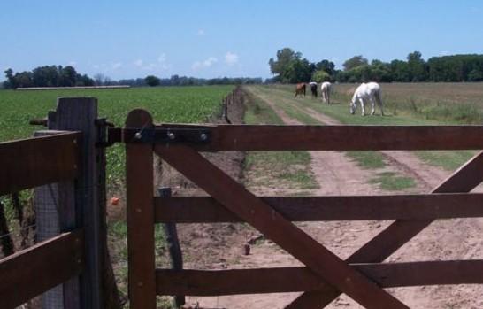 impuesto-inmobiliario-rural