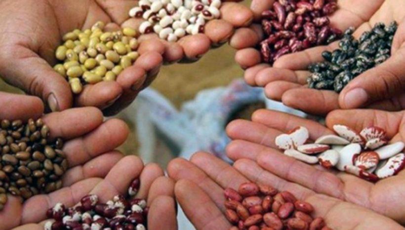 inase-semillas-nativas