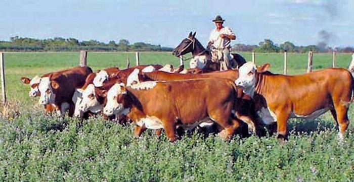 La-ganadería-respuesta-a-una-visión-sesgada.-2