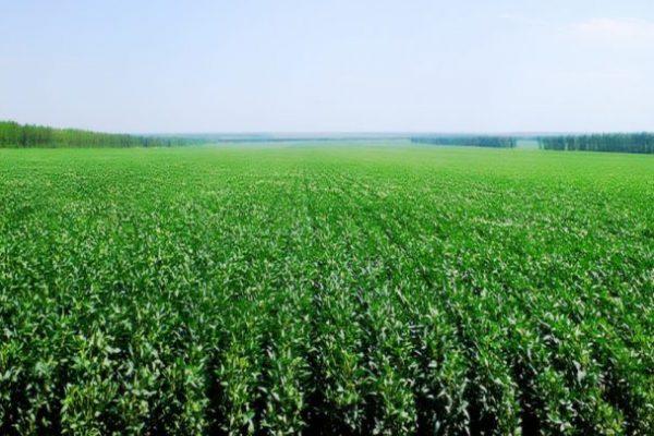 Cultivo-de-soja_conew2-780x405